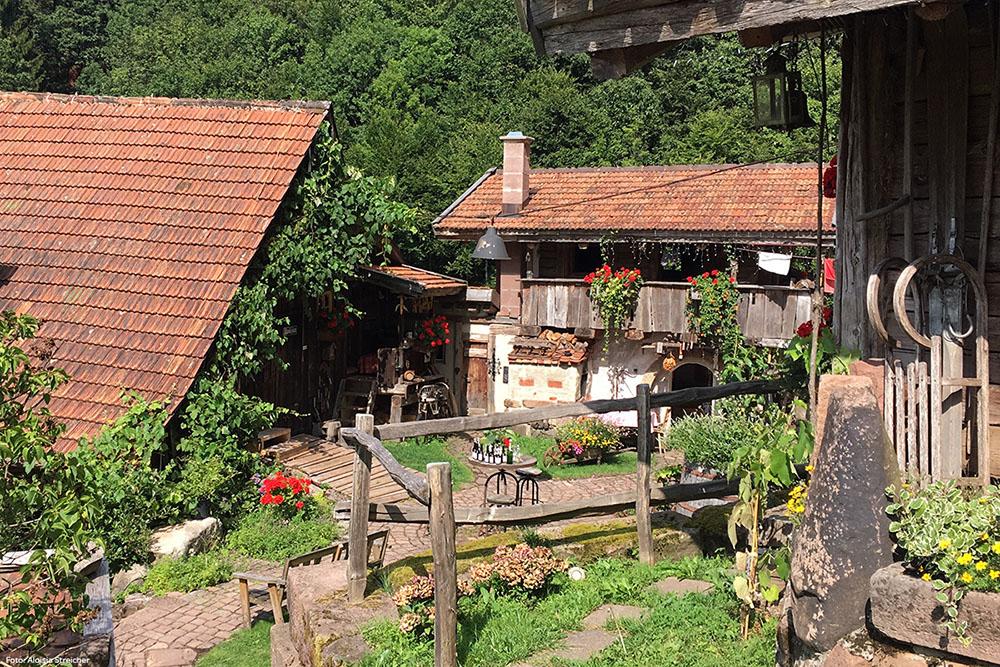 Bader Almhütte: Blick von der Hühner-Suite aus | Foto: Aloisia Streicher